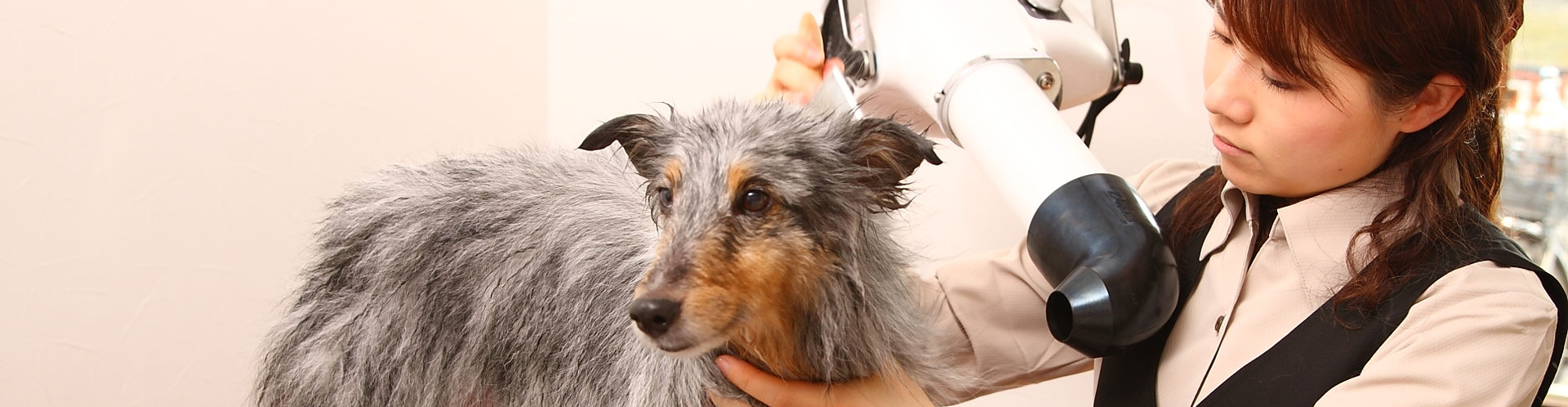 愛知県清須市にある犬の美容室・トータルサロンのCanCan(キャンキャン)